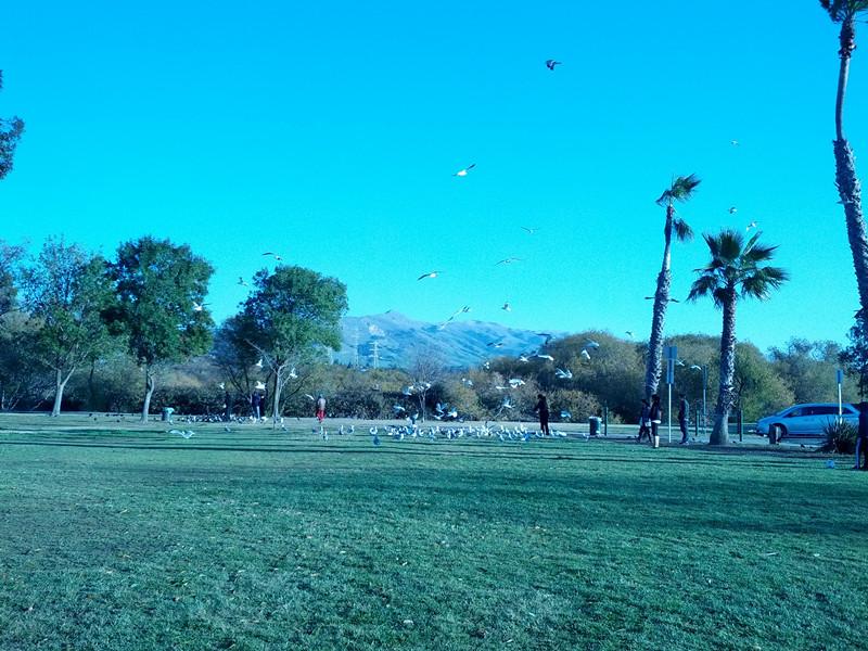 fremont central park-birds