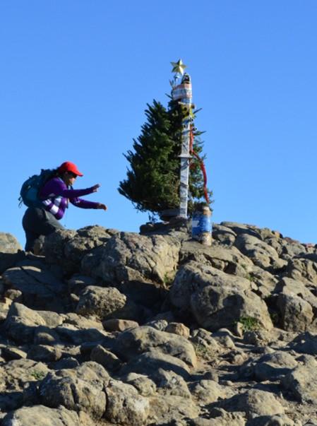 mission peak-xmas tree