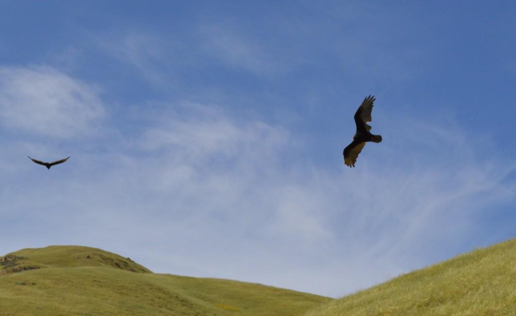 ed levin park eagles