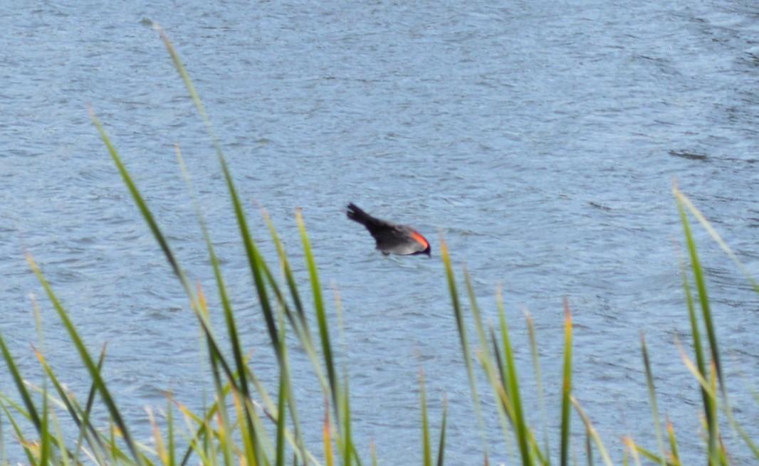 sandy wool lake_birds