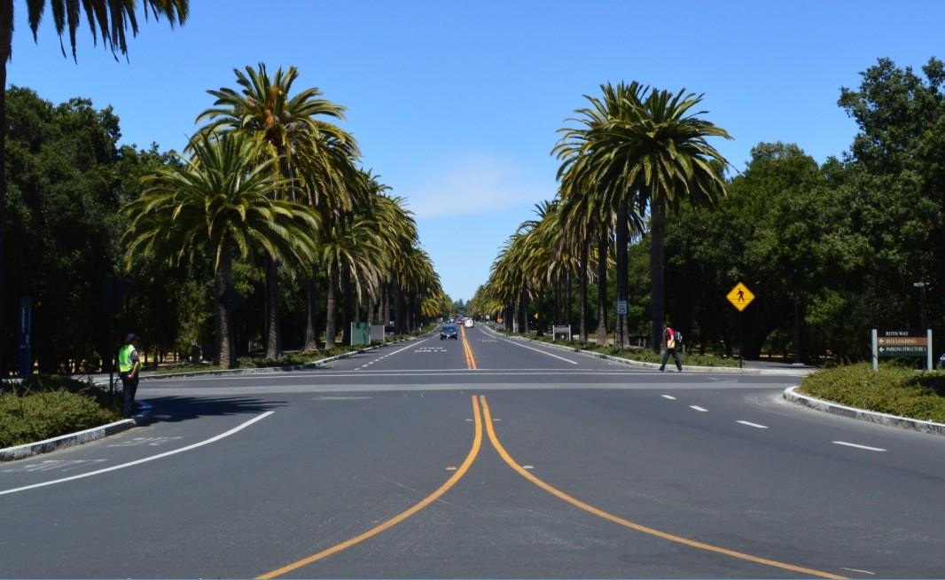 stanford univercity palm drive棕榈大道
