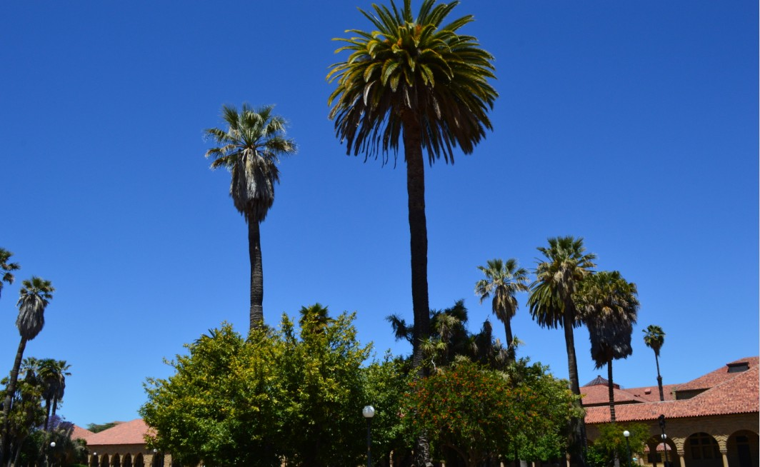 stanford univercity_palm trees