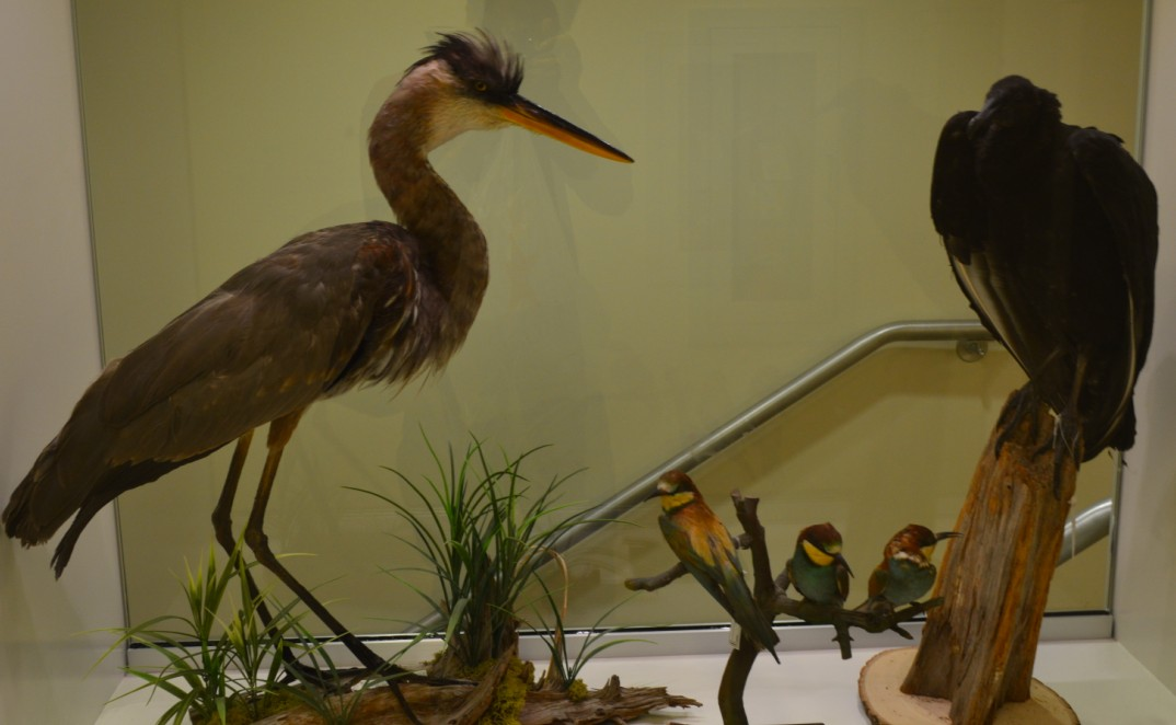 washington-dc-The National Museum of Natural History_dc bird
