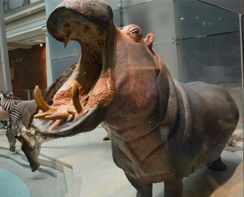 washington-dc-The National Museum of Natural History_mammals