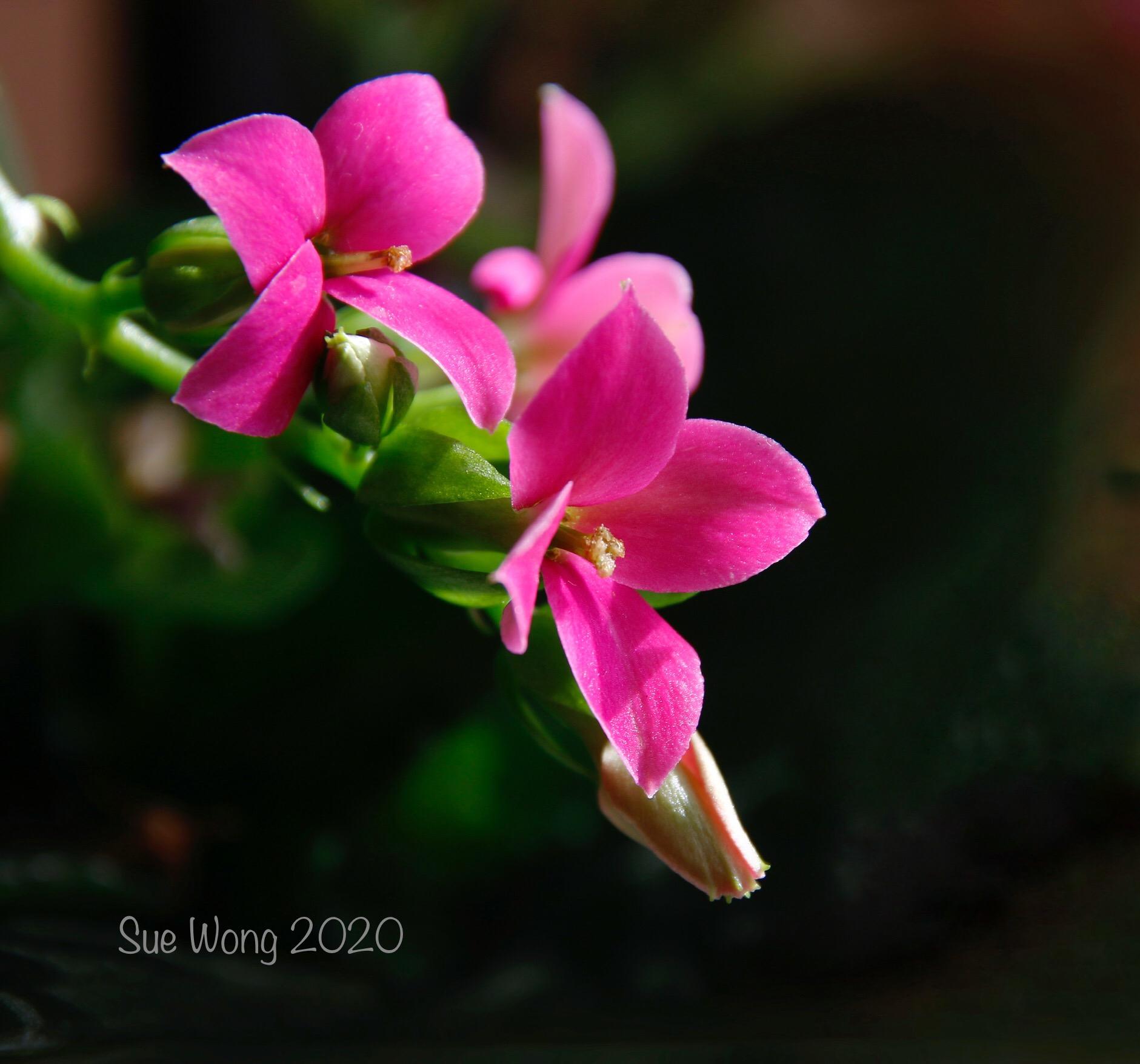 SueWong2